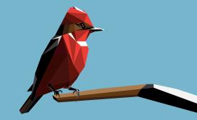 Churrinche / Vermilion fly-catcher
